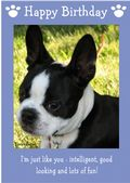 "Boston Terrier-Happy Birthday - ""I'm Just Like You"" Theme"
